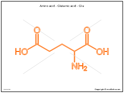 Amino acid - Glutamic acid - Glu