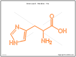 Amino acid - Histidine - His