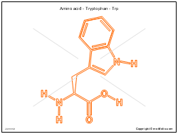 Amino acid - Tryptophan - Trp
