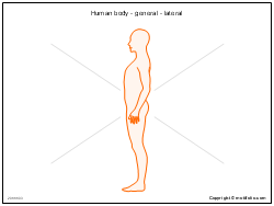 Human body - general - lateral