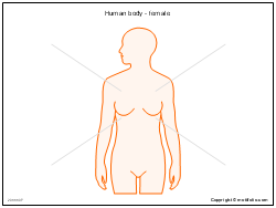Human body - female