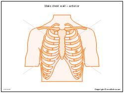 Male chest wall � anterior