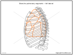 Broncho-pulmonary segments � left lateral