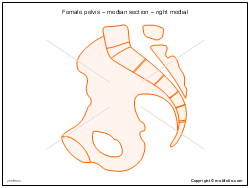 Female pelvis � median section � right medial