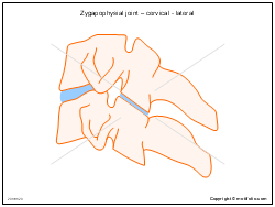 Zygapophysial joint � cervical - lateral