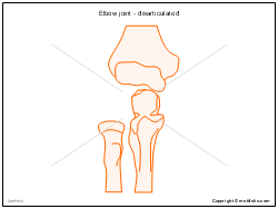 Elbow joint - disarticulated
