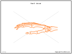 Hand - lateral