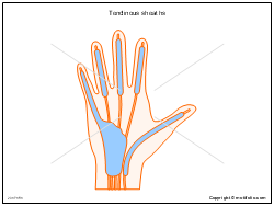 Tendinous sheaths