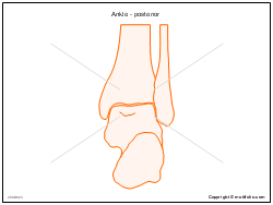 Ankle - posterior