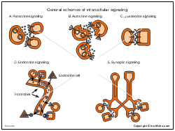 General schemes of intercellular signaling