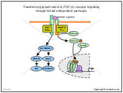 Transforming growth factor-beta TGF-beta receptor signaling through Smad-independent pathways