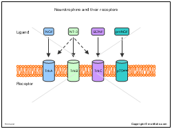 Neurotrophins and their receptors