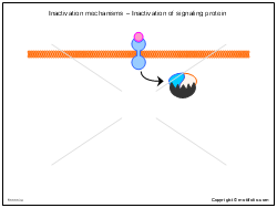 Inactivation mechanisms - Inactivation of signaling protein
