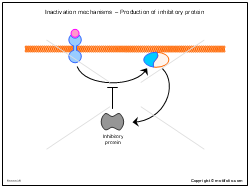 Inactivation mechanisms - Production of inhibitory protein