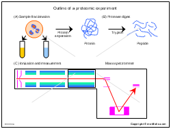 Outline of a proteomic experiment