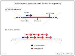 Different types of primer for chain termination sequencing