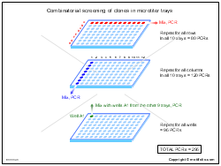 Combinatorial screening of clones in microtiter trays