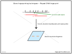 Clone fingerprinting techniques-Repeat DNA fingerprint