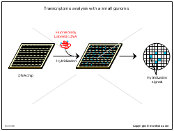 Transcriptome analysis with a small genome
