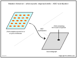 Mutation detection-allele-specific oligonucleotide-ASO hybridization