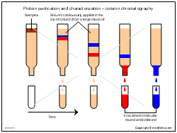 Protein purification and characterization-column chromatography