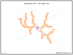Neuroglial cells - Microglial cell