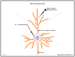 Microionophoresis