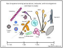 Size comparison among various atoms molecules and microorganisms