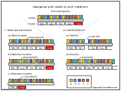 Categories and results of point mutations