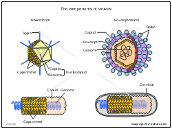 The components of viruses