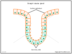 Straight tubular gland