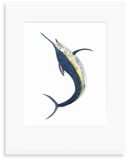 Marlin - 8 x 10 Print in 11 x 14 Mat