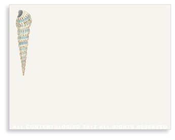 "Cone Shell - Non-Personalized Note Cards (4.25"" X 5.5"")"