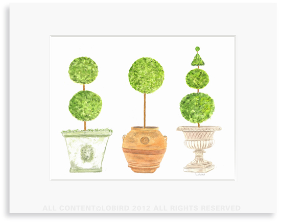 Pots with Topiary - collection 3- 8 x 10 Print in 11 x 14 Mat