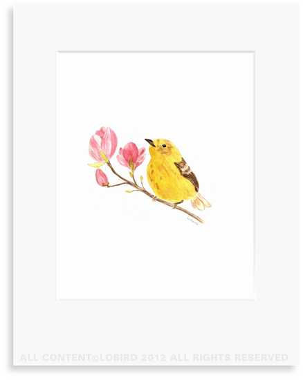 Warbler on Magnolia Branch - 8 x 10 Print in 11 x 14 Mat