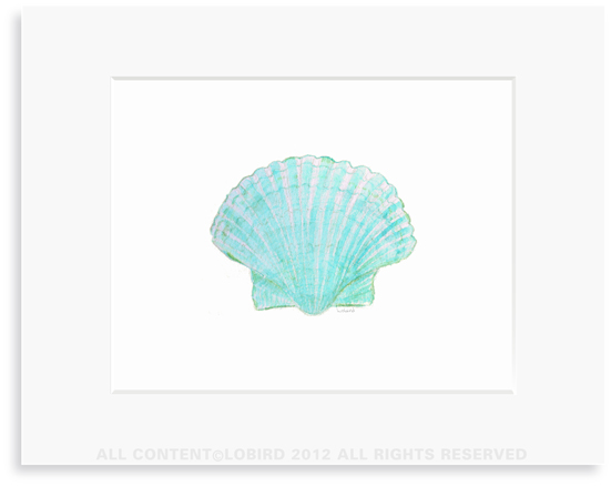 Aqua Scallop Sea Shell - 8 x 10 Print in 11 x 14 Mat