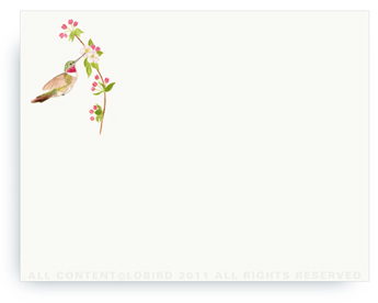 "Ruby Throated Hummingbird - Non-Personalized Note Cards (4.25"" X 5.5"")"