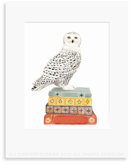 Snowy Owl on Stack of Books - 8 x 10 Print in 11 x 14 Mat