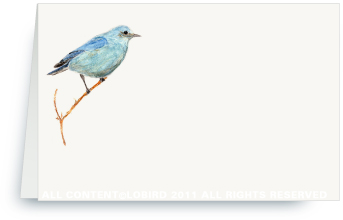 Mountain Blue Bird - Place cards