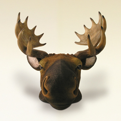 Moose face Money Bank by Swibco