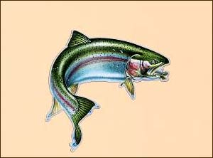 Car/Truck Magnet-Rainbow Trout