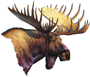 Car/Truck Magnet Moose