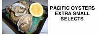 Pacific Oysters  Extra Small   Selects