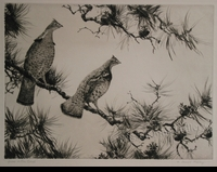 RIPLEY:  GROUSE IN A PINE BOUGH