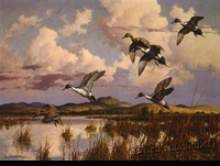 "ADAMSON:  PINTAILS</a><br><font color=""#ffffff""><b> - SOLD</b></font>"