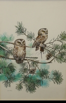 HINES:  SAW-WHET OWLS</a><br><b>- SOLD</b>