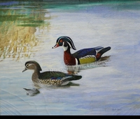 HINES:  WOOD DUCKS