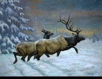 BIERLY:  HEADING OUT - ELK