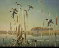 JAQUES: GREEN-WINGS & PINTAIL