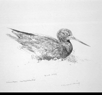 HARRIS-CHING:  BLACK STILT</a><br><b>- SOLD</b>